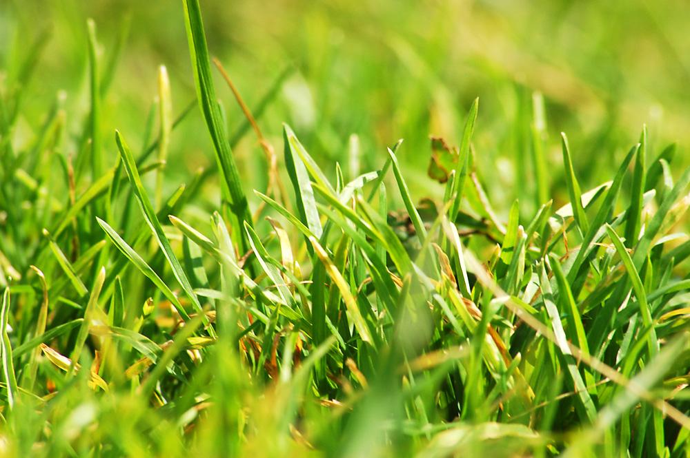 Spikes of grass