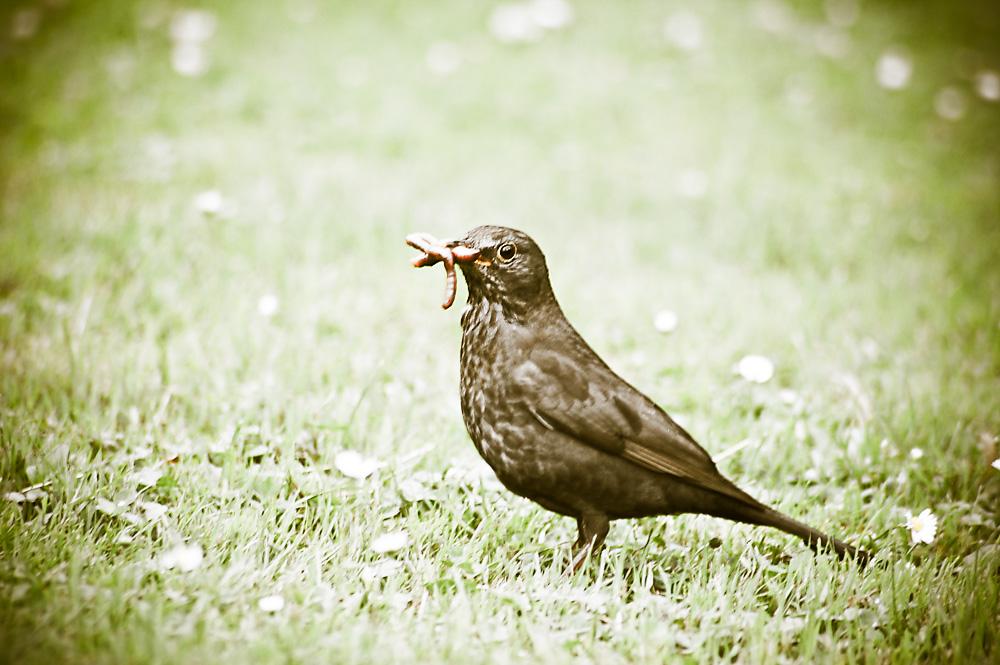 Bird hunting for food