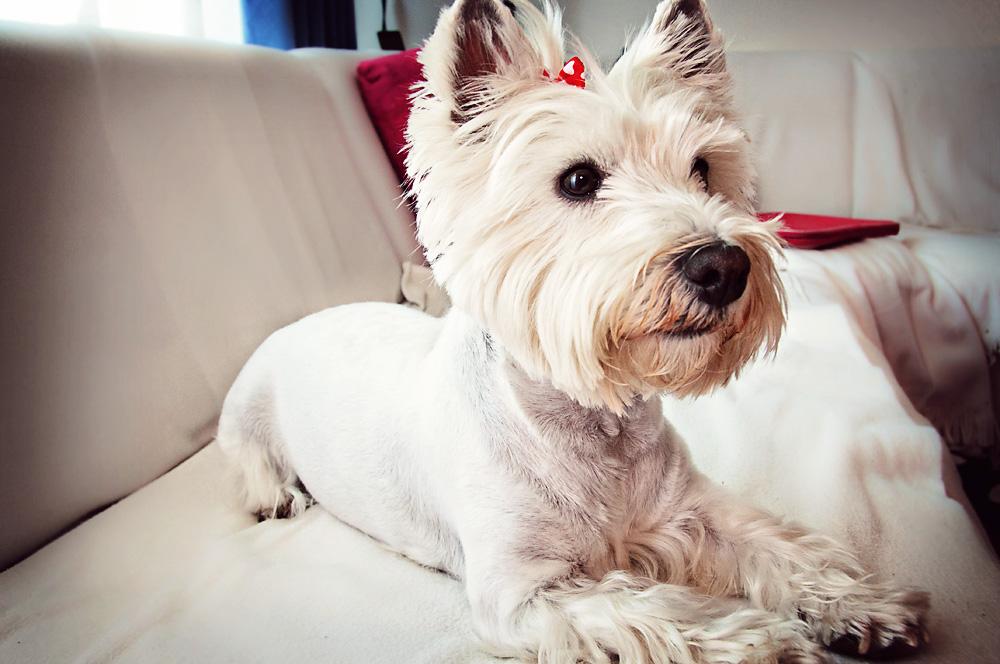 Our dog, Maya
