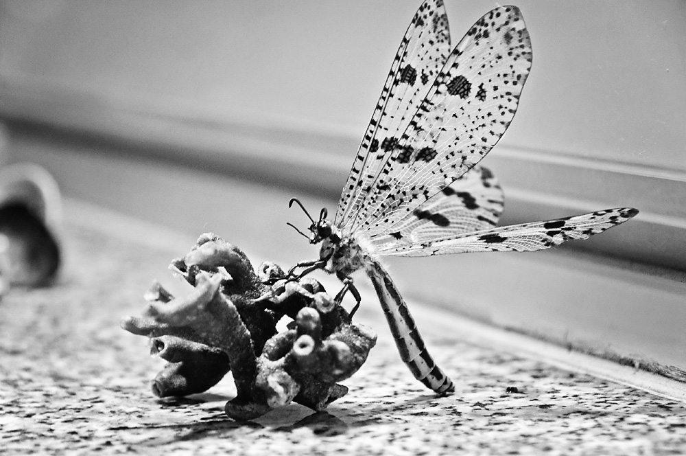 Life of a dragonfly