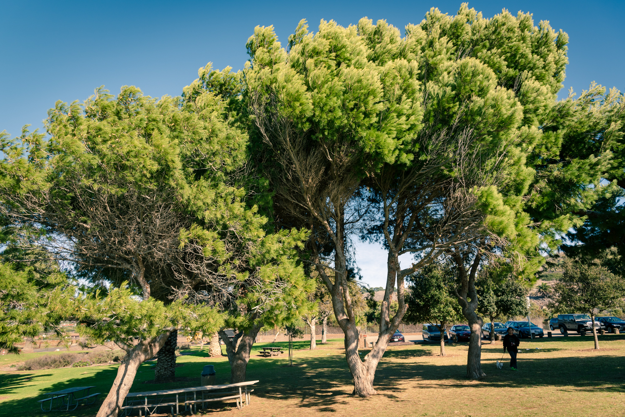 Beautiful trees at Point Vicente park