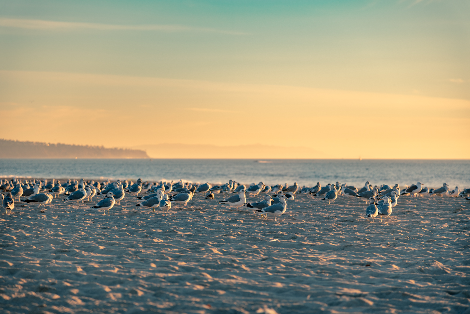 Seagulls resting on sand